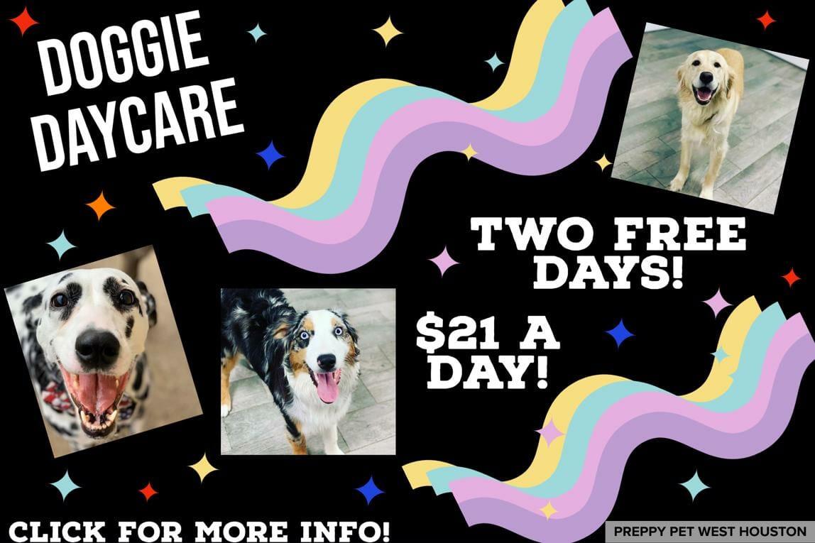 Preppy Pet West Houston | Doggie Daycare Services