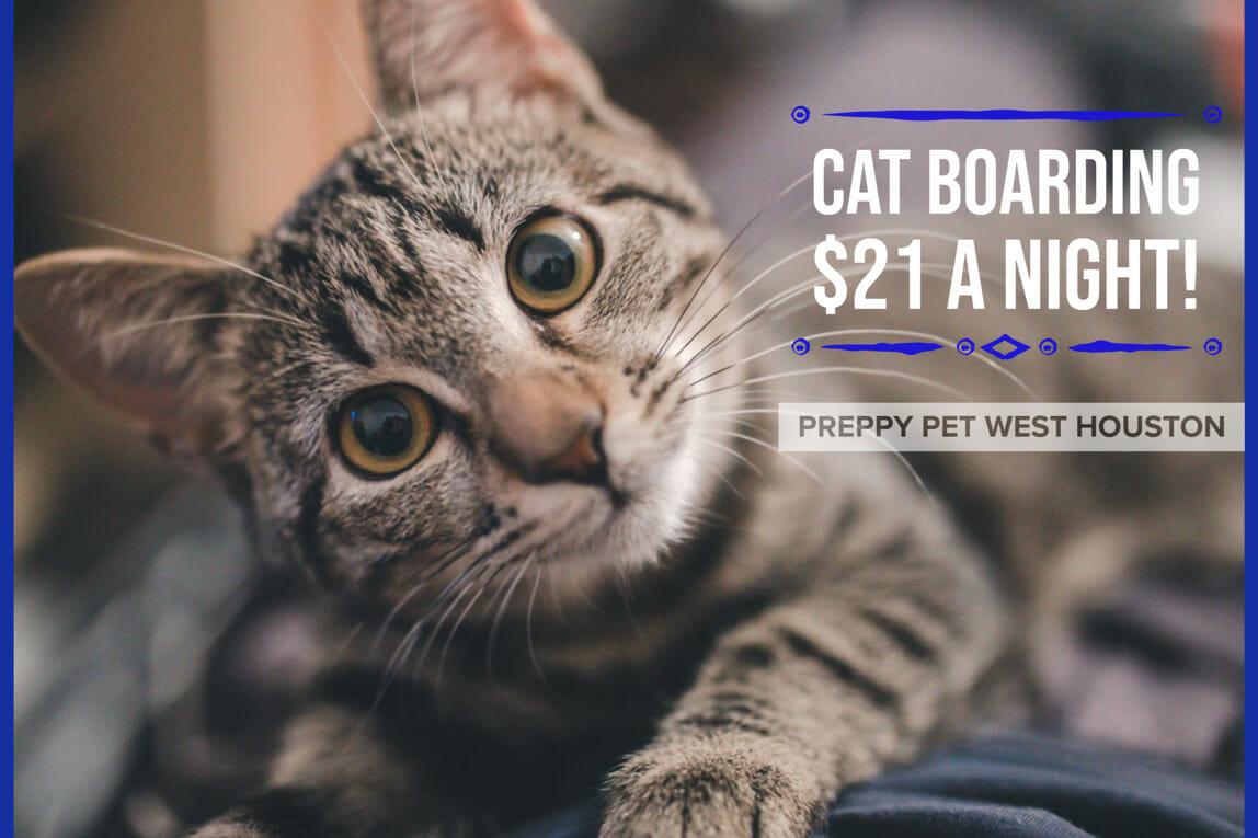 Preppy Pet West Houston Cat Boarding Prices