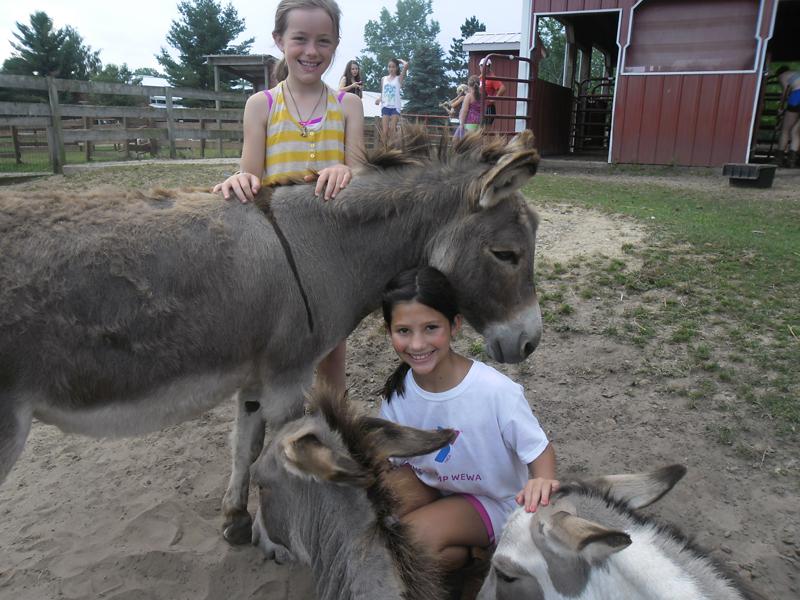 br-sa-donkeys