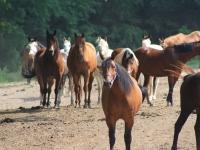 br-horses-3