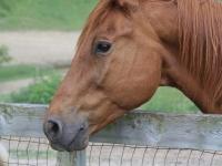 br-horses-4