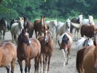 BR Horses