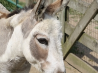 br-sa-donkey-001