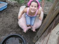 br-sa-pigs-2012
