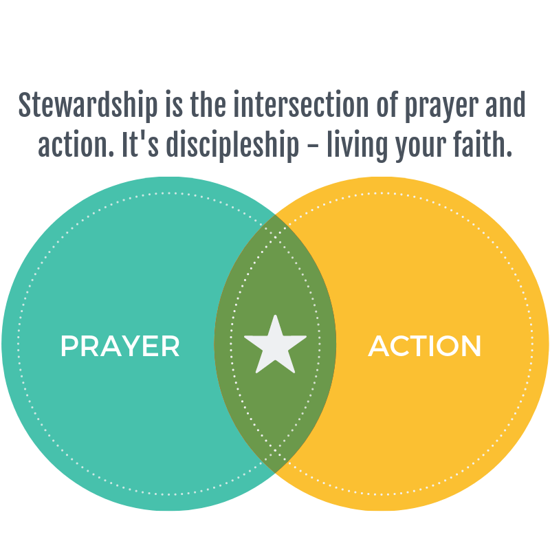 the definition of stewardship