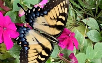 National Garden Week: Be a Good Host to Pollinators This Summer by RGC Blogger Lisa Ethridge