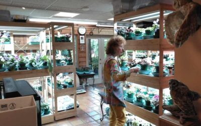 National Garden Week: African Violets Galore, by RGC Members Mary Booth Cabot & Suzy Crowe