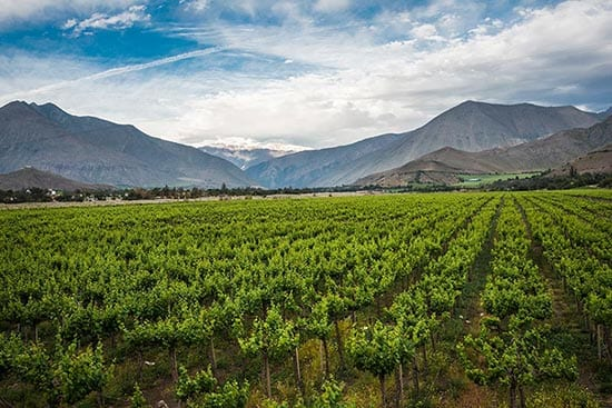 Luxury Wine Tours in Chile