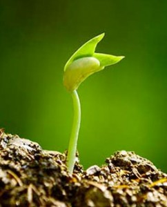growing-in-faith