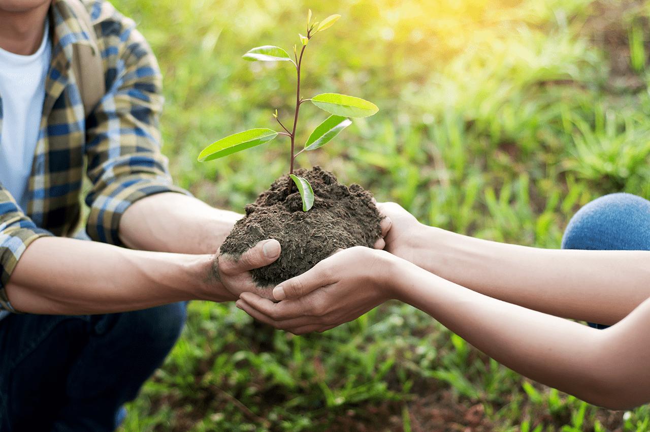Planting hands