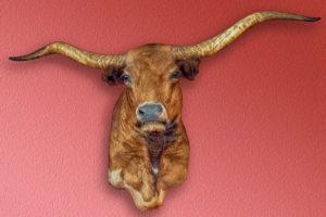 Texas, longhorn, steer, taxidermy, mount, trophy