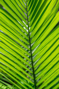 Palm, leaf, lime green, abstract, pattern, nature