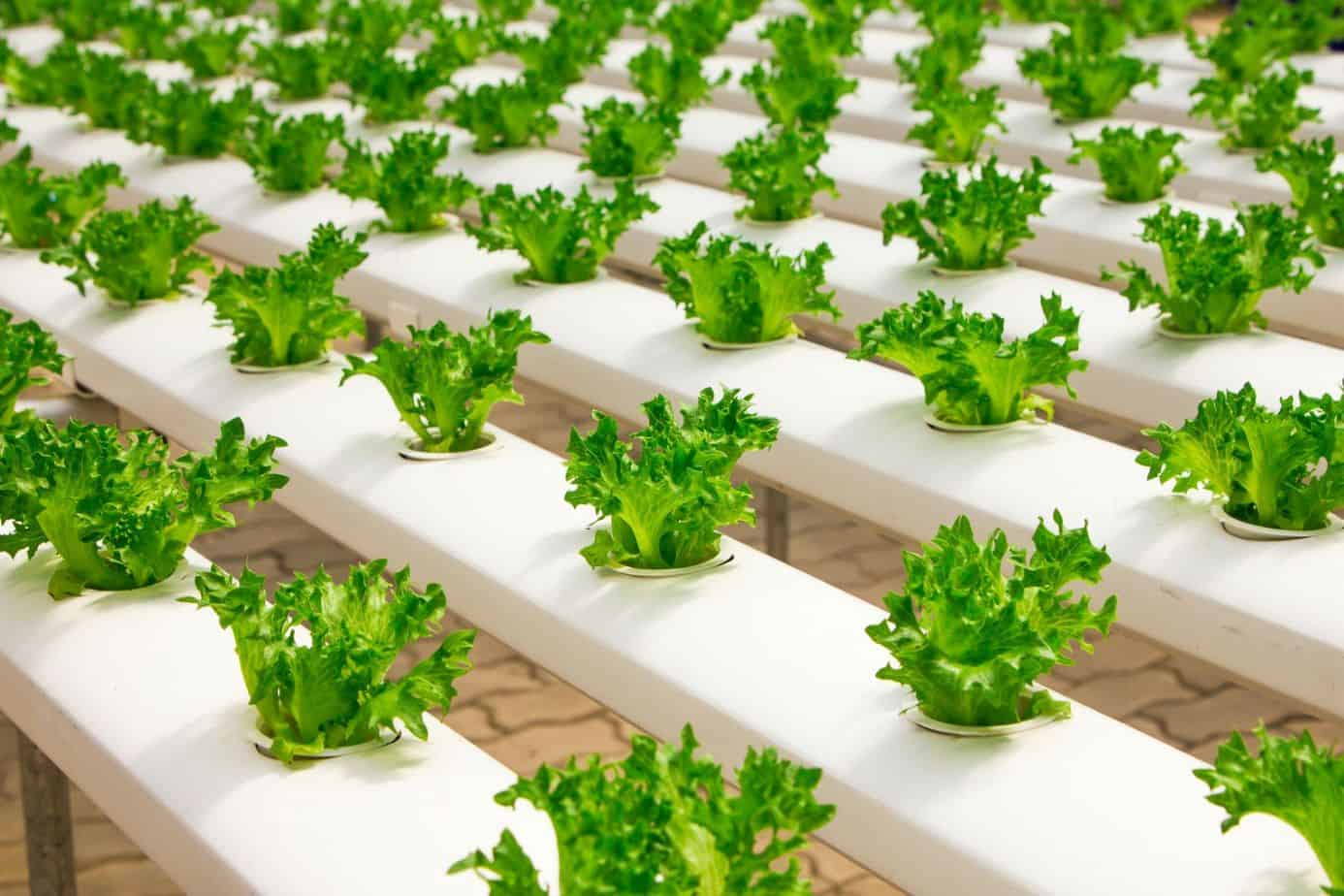 How Advancing Technology Takes Small Farming to New Levels