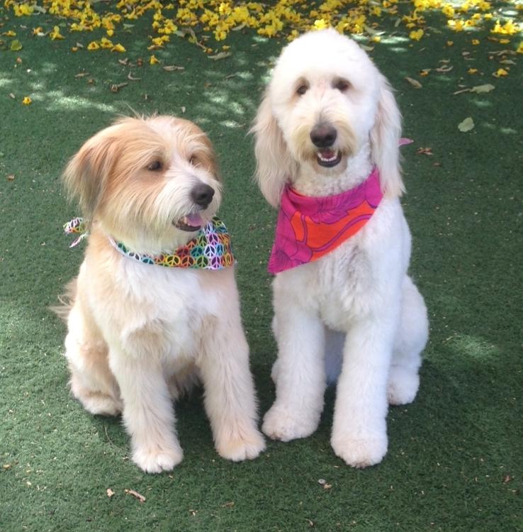 Dog Training at Crossroads Pet Resort