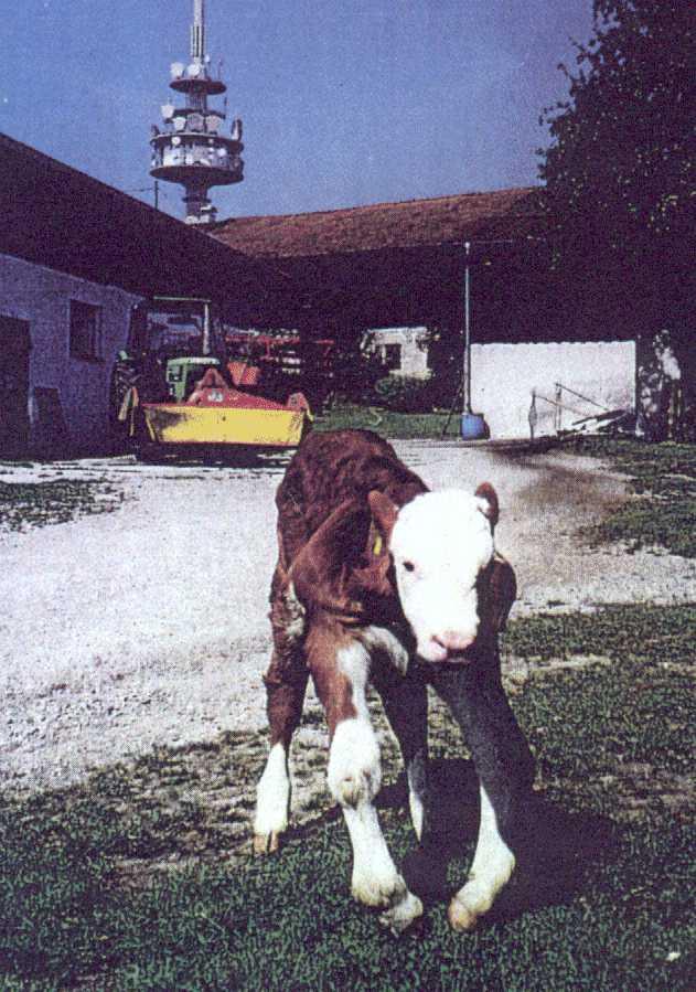 German_Dairy_1
