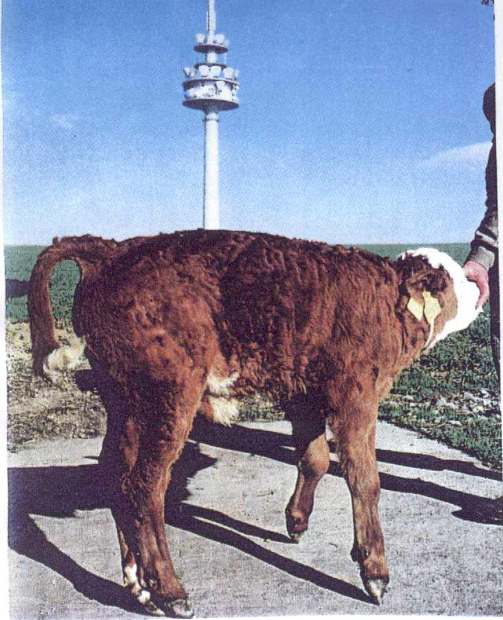German_Dairy_2