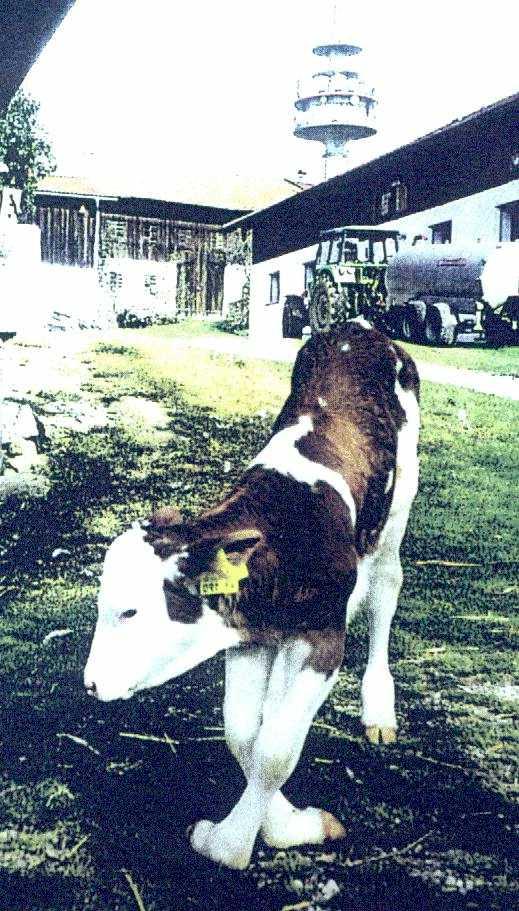 German_Dairy_3