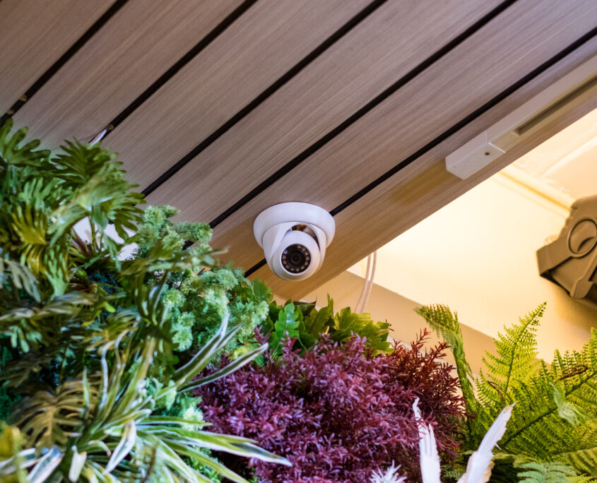 Dome security CCTV Hidden on corner room with plant decorate