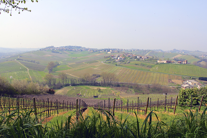 The farmers have been producing wine for over 800 years