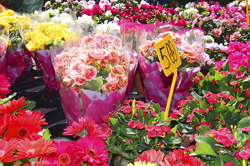 Beautiful flowers are just one of the many things you could buy