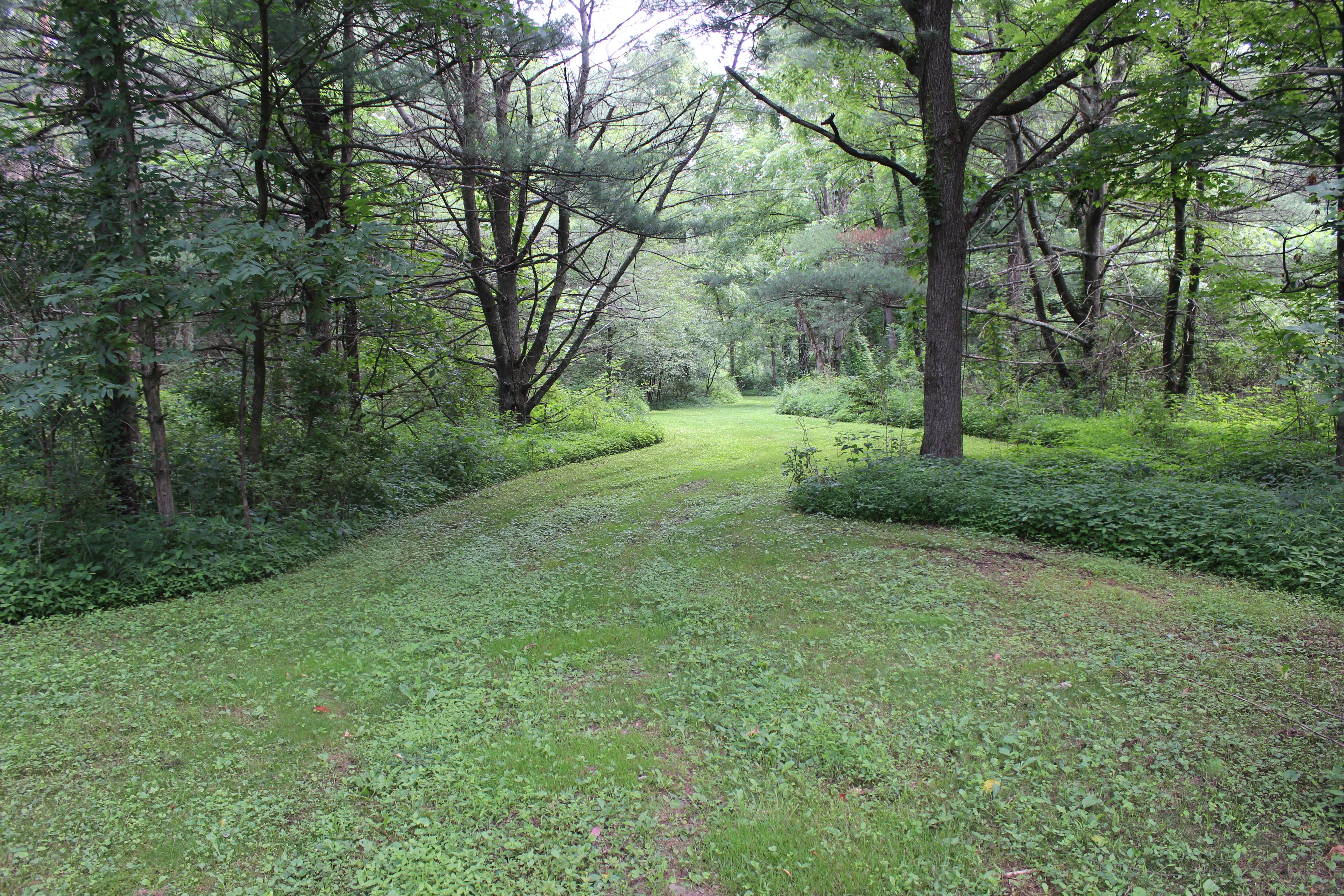 56+/- Acres, Land in Muncy PA