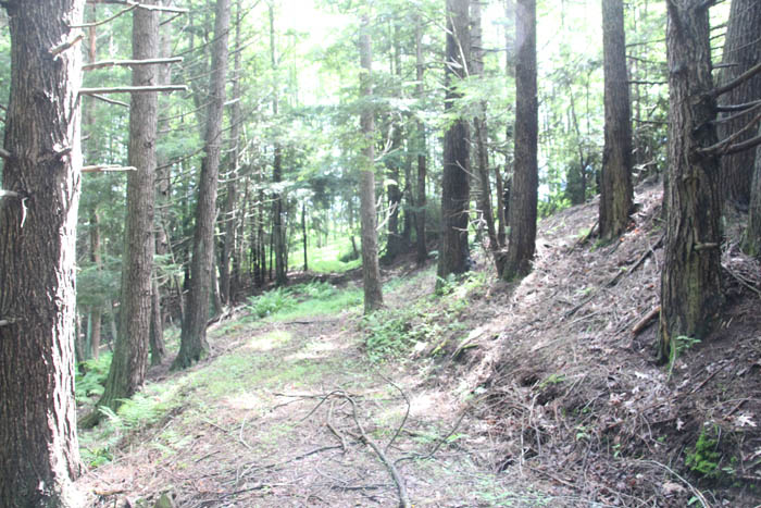 48+/- Acres of Prime Hunting Land