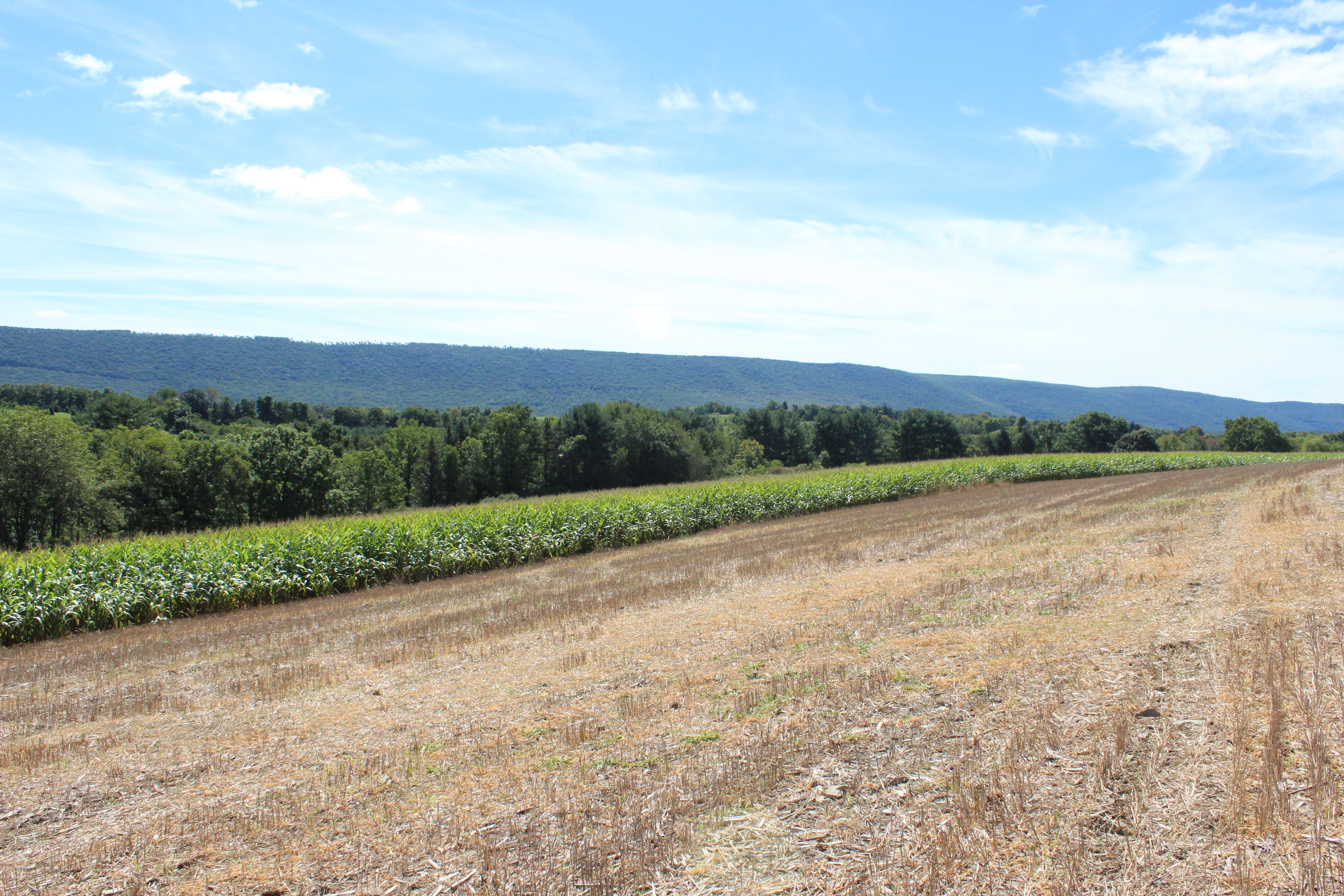 16 +/- ACRES of TILLABLE/WOODED LAND in Stillwater, PA