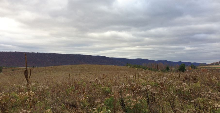 41+/- Acres of Land for Sale North of Orangeville, PA