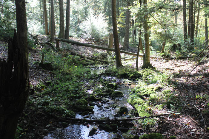 40 +/- Wooded Acres in Unityville