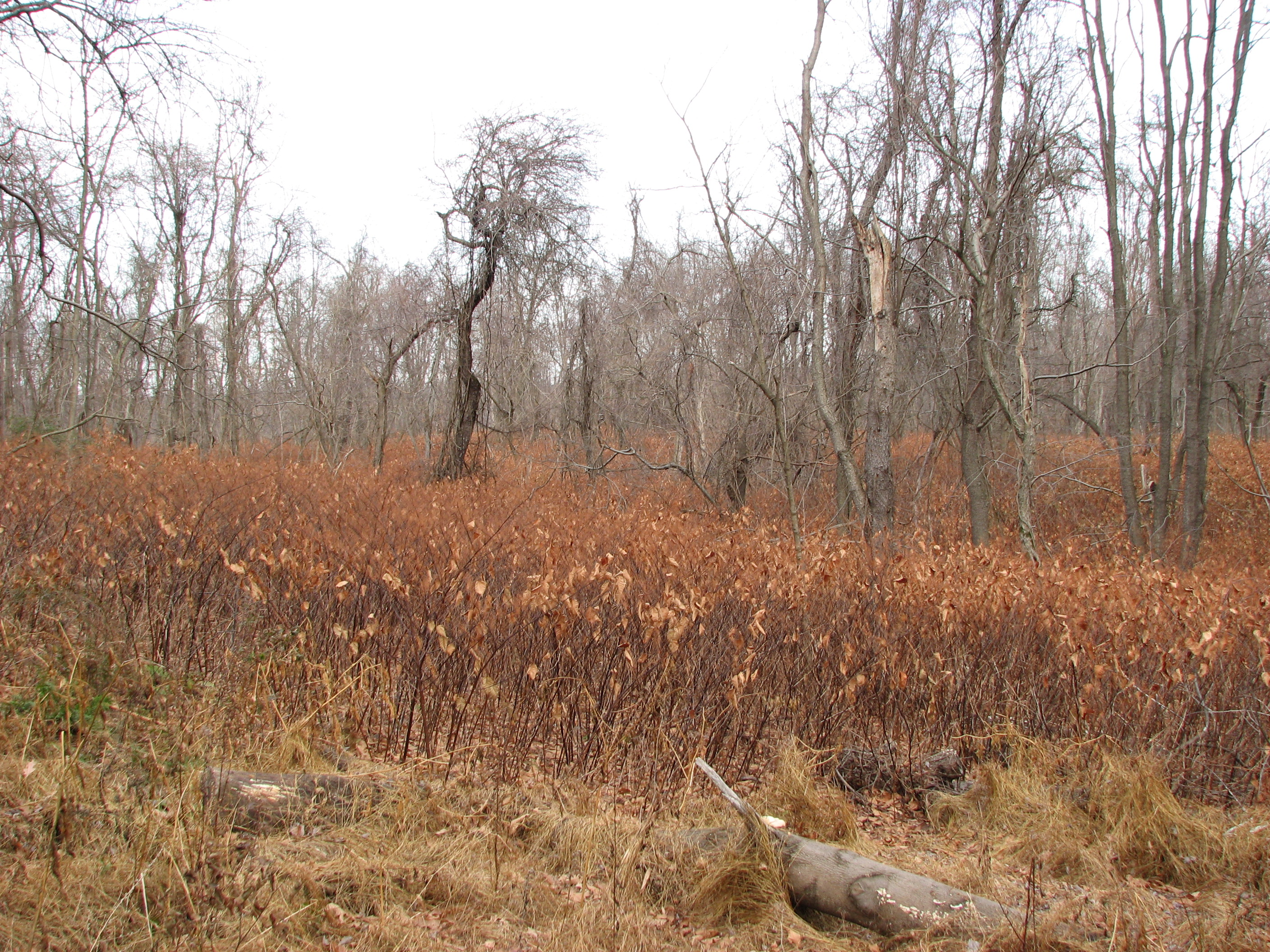 51 +/- Acres, Woods, Fields, River Frontage