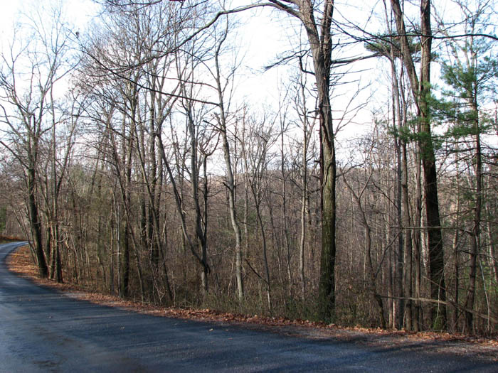 10+/- Acres, Wooded Lot in Danville