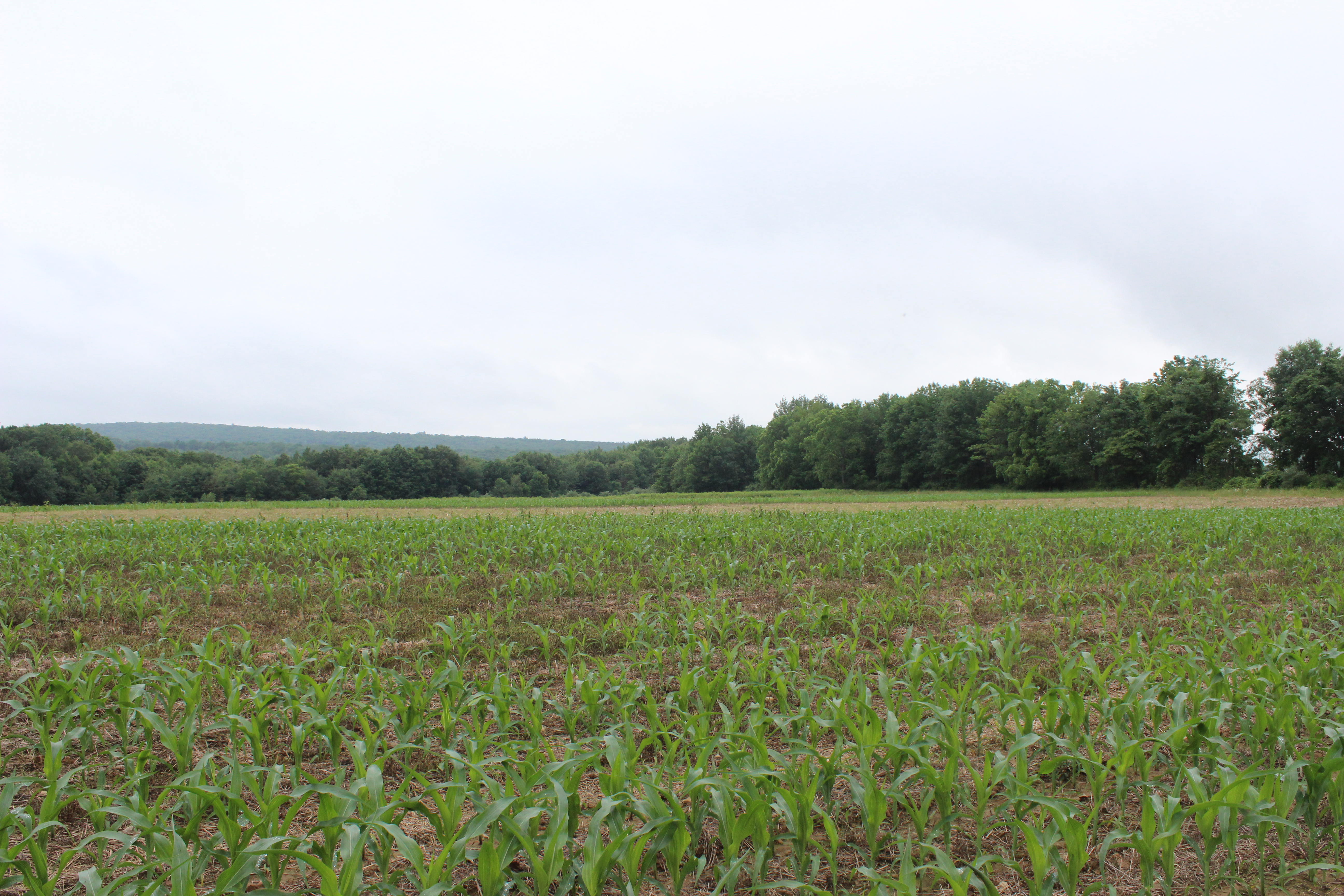 36+/- Acres, Open/Wooded