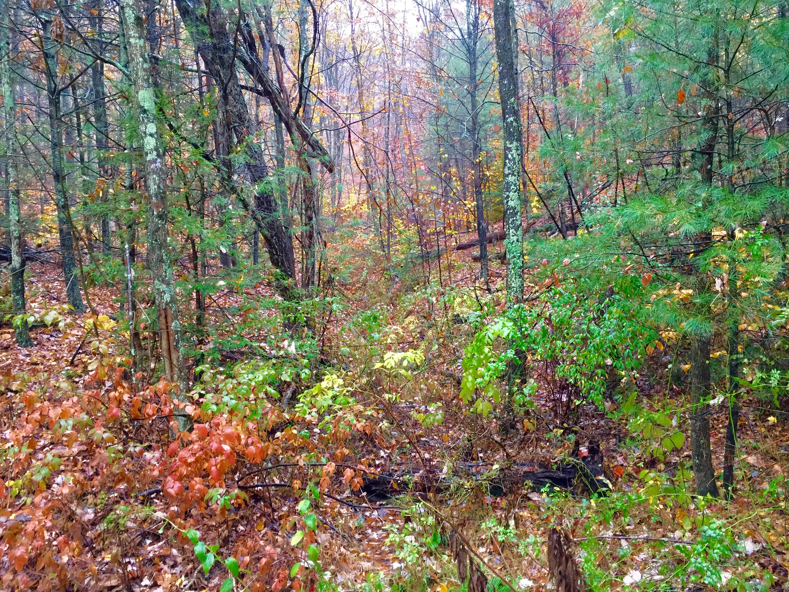 22 Acres Land for Sale in Millville