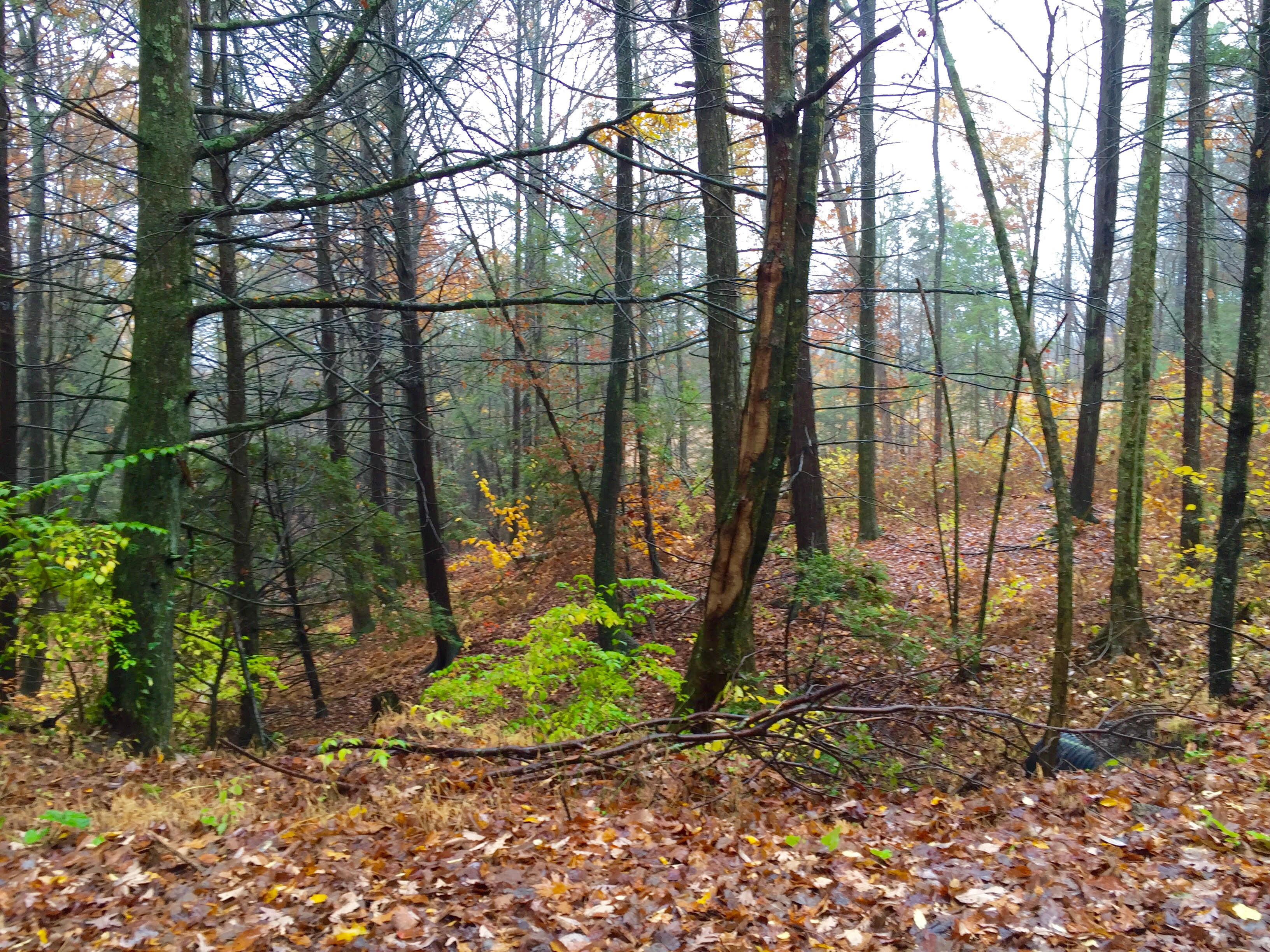 10 Acres in Millville PA