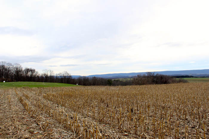 28 Acres of Prime Land in Columbia County