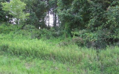 Conveniently Located Building Lot