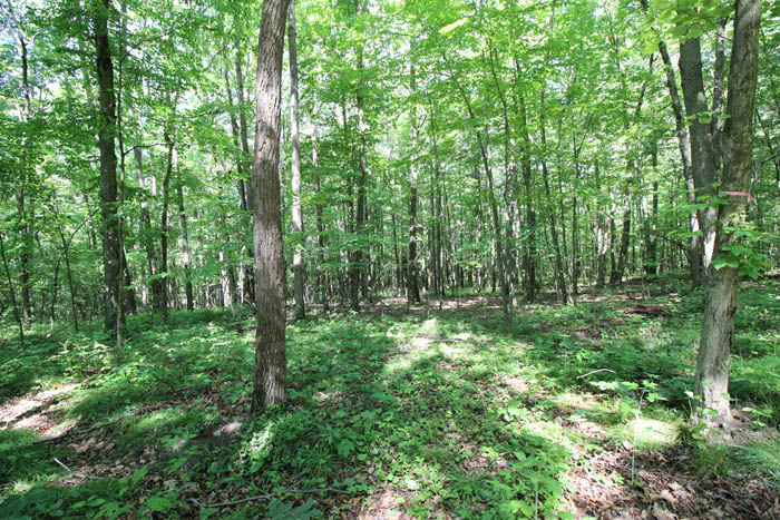 6 Building Lots Ranging from $55,000-90,000 in Lackawanna County