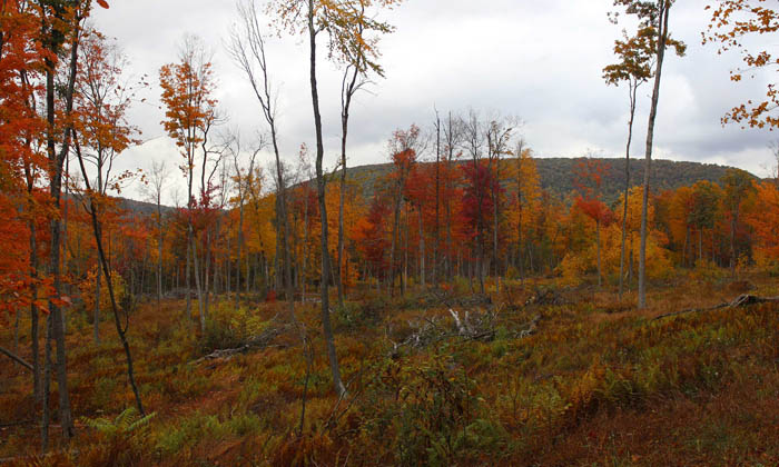 210 +/- Acres of Land