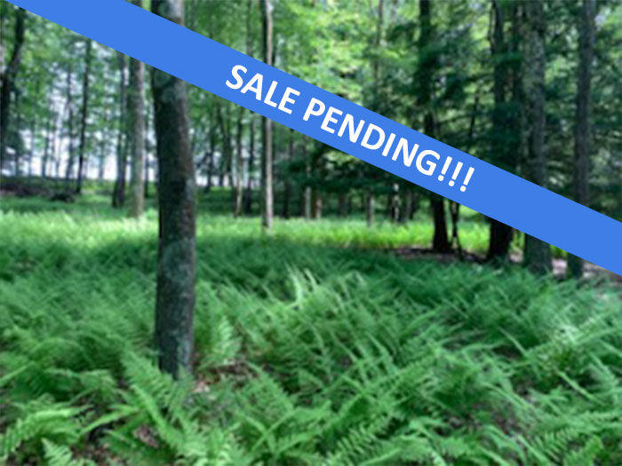 55+/- Acres of Land