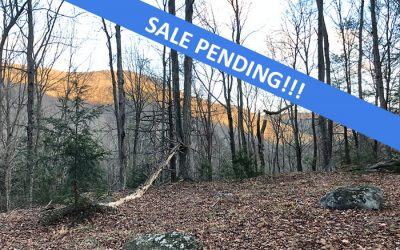 241+/- Acres of Prime Hunting Land