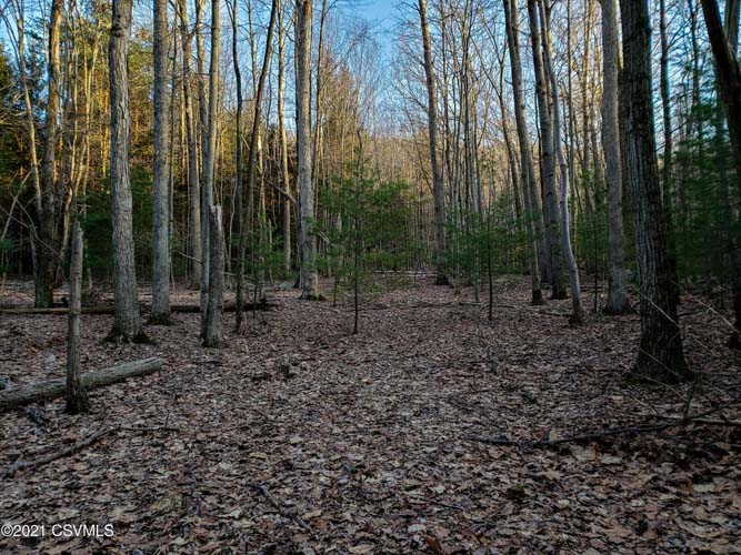 59+/- Mostly Wooded Acres