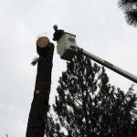 Another Bucket Truck Tree Removal