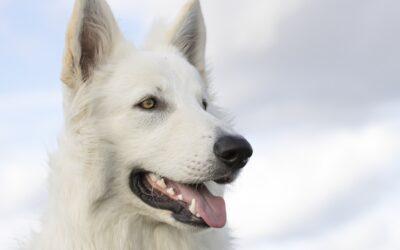 Collar traduce los ladridos de tu perro usando inteligencia artificial