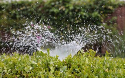 Irrigation Settings and Inspection to Save Water