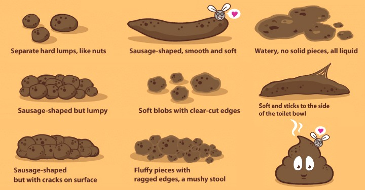 Everything You Need to Know About Your Poop