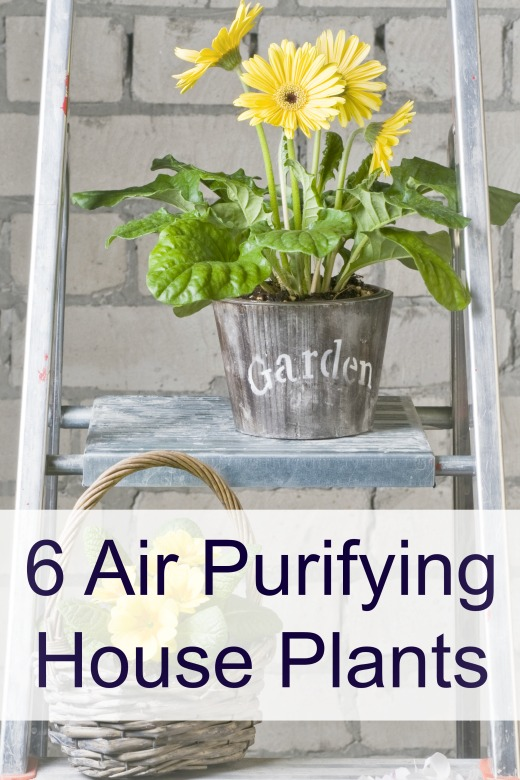 6 Air Purifying House Plants ~