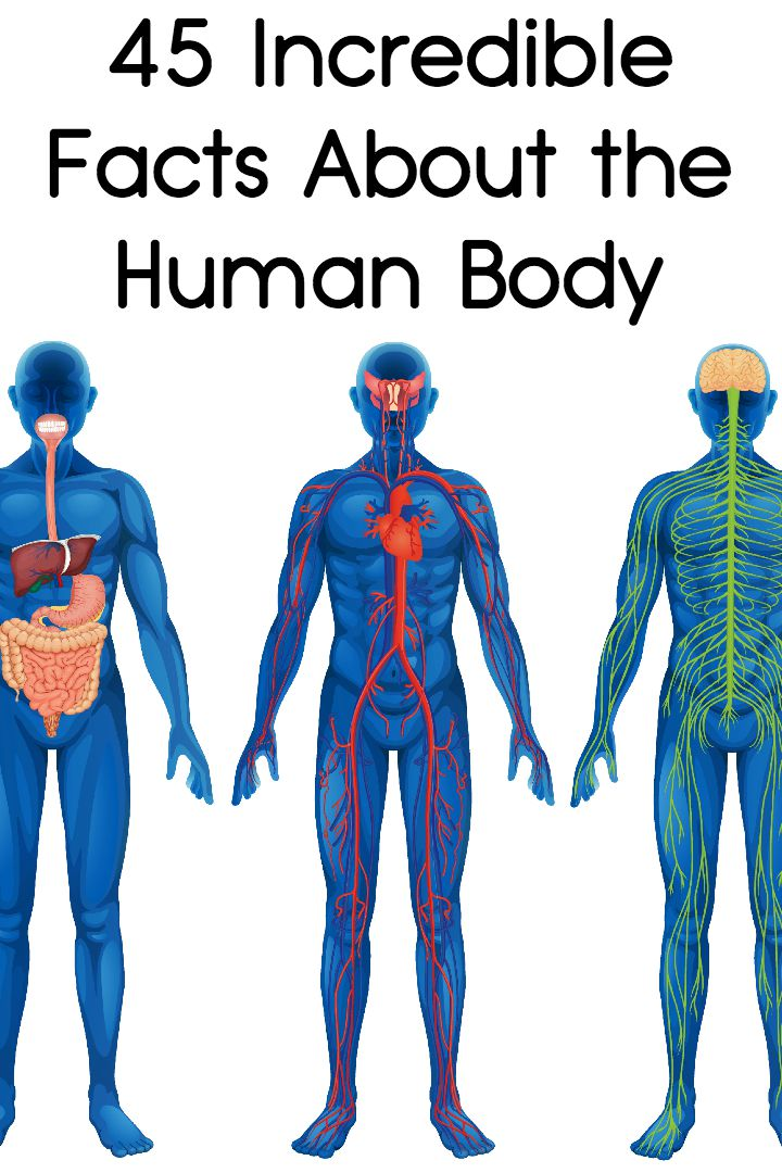 45 Incredible Facts About the Human Body ~