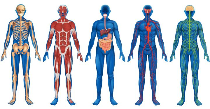 45 Incredible Facts About the Human Body