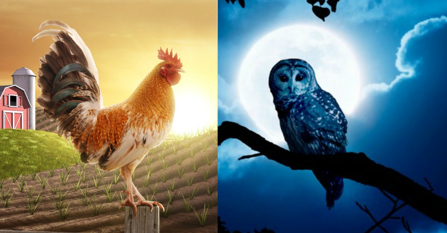 8 Interesting Differences Between Early Birds and Night Owls
