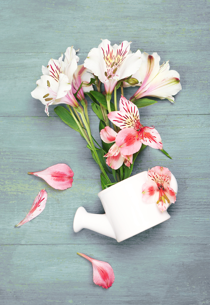 Alstromeria ~ 10 Most Common Flowers and Their Meanings ~ https://facthacker.com/most-common-flowers-and-their-meanings/